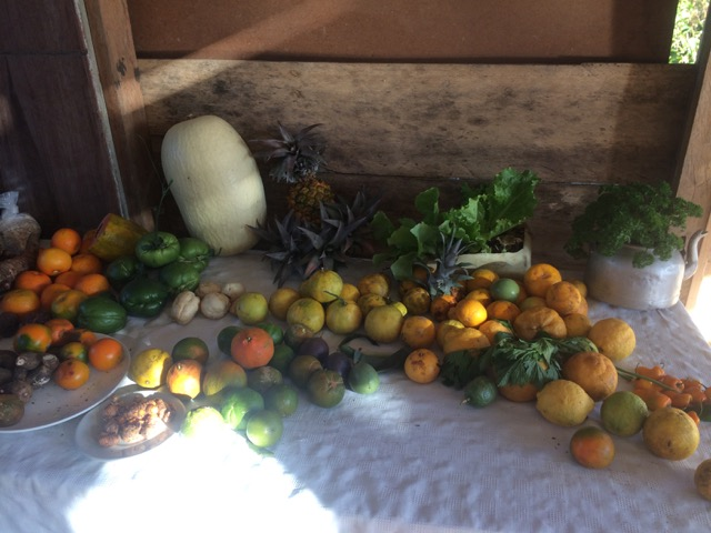 fruits costa rica