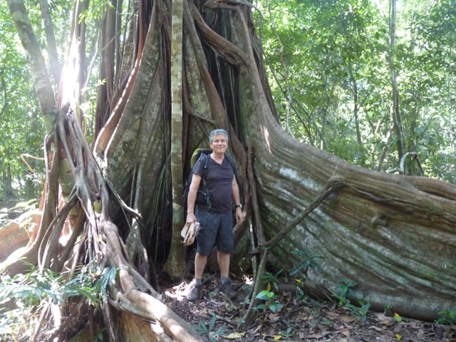 Corcovado - arbres