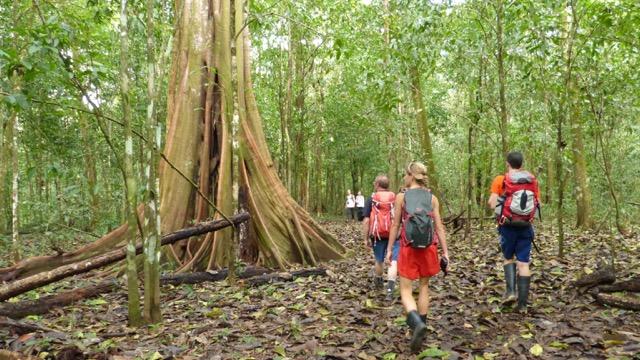 marche en forêt parc national Manuel Antonio