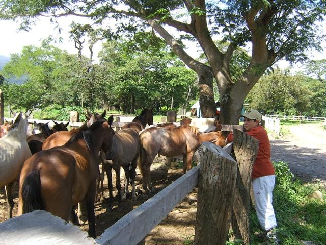 Costa Rica hacienda chevaux cavaliers