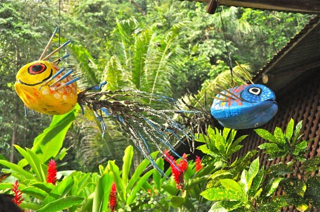 colibri Costa Rica