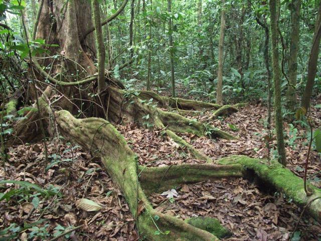 balade forêt costa rica