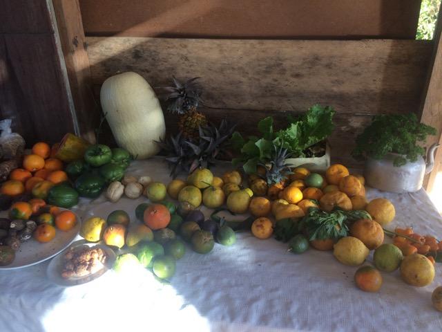 fruits du jardin montagne costa rica