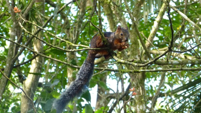 animal Costa Rica