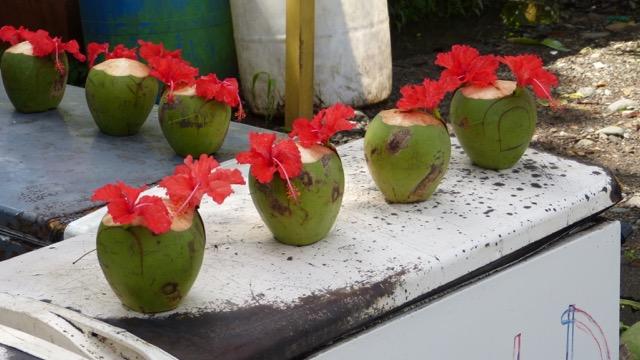 noix de coco Costa Rica